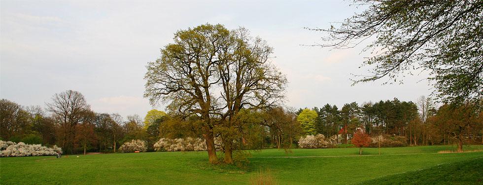 Park, Foto: Ulrich Schaub
